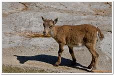 Parc Zoologique de Salzbourg-0002