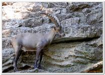Parc Zoologique de Salzbourg-0004