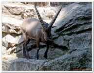 Parc Zoologique de Salzbourg-0005