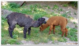Parc Zoologique de Salzbourg-0007