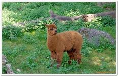 Parc Zoologique de Salzbourg-0009