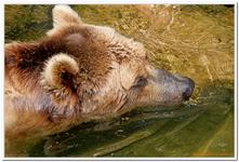 Parc Zoologique de Salzbourg-0014