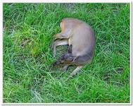 Parc Zoologique de Salzbourg-0016