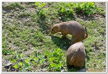 Parc Zoologique de Salzbourg-0018