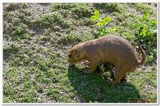 Parc Zoologique de Salzbourg-0019
