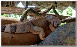 Parc Zoologique de Salzbourg-0023
