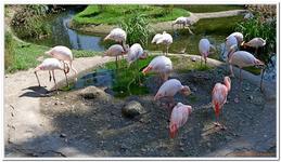 Parc Zoologique de Salzbourg-0024