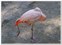 Parc Zoologique de Salzbourg-0025