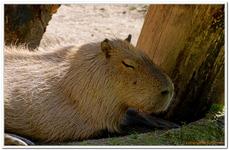 Parc Zoologique de Salzbourg-0034