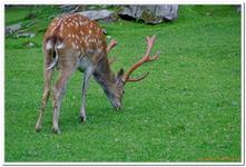 Parc Animalier de Ferleiten-0005