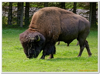 Parc Animalier de Ferleiten-0009