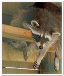 Parc Animalier de Ferleiten-0024