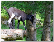 Parc Animalier de Ferleiten-0026