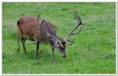 Parc Animalier de Ferleiten-0040