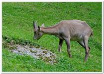 Parc Animalier de Ferleiten-0042