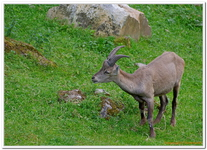 Parc Animalier de Ferleiten-0044