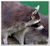 Parc Animalier de Ferleiten-0045