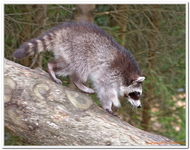 Parc Animalier de Ferleiten-0047