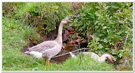 Parc Animalier de Ferleiten-0049