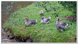 Parc Animalier de Ferleiten-0052