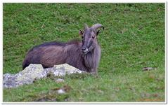 Parc Animalier de Ferleiten-0053