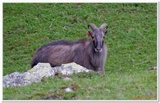 Parc Animalier de Ferleiten-0054