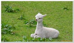 Parc Animalier de Ferleiten-0058