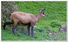 Parc Animalier de Ferleiten-0059
