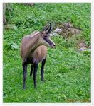 Parc Animalier de Ferleiten-0060