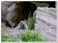 Parc Animalier de Ferleiten-0063