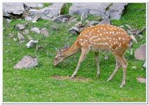 Parc Animalier de Ferleiten-0064