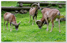 Parc Animalier de Ferleiten-0065