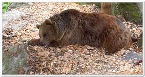 Parc Animalier de Ferleiten-0066
