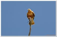 Greifvogelschau Hochalm-0040
