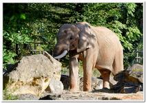 Zoo Amnéville-0006