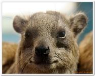 Zoo Amnéville-0019