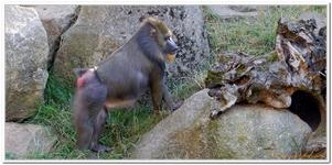 Zoo Amnéville-0023
