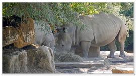 Zoo Amnéville-0040