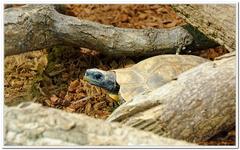 Zoo Amnéville-0057