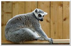 Zoo Amnéville-0062