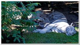 Zoo Amnéville-0071