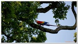 Zoo Amnéville-0078