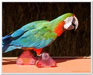 Zoo Amnéville-0082