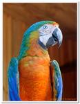 Zoo Amnéville-0088