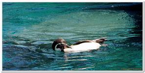 Zoo Amnéville-0098