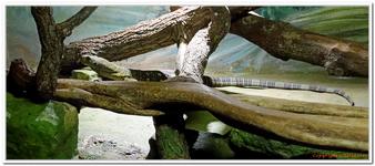 Zoo Amnéville-0157