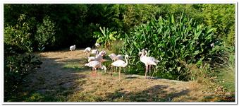 Zoo Amnéville-0192