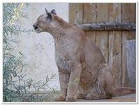 Zoo Amnéville-0198