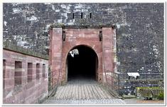La Citadelle de Belfort-0029