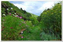 Jardin Médiéval de Murbach-0003
